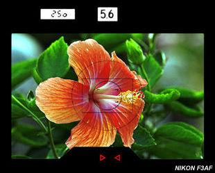 尼康F3AF取景器信息与马来西亚热带木槿花