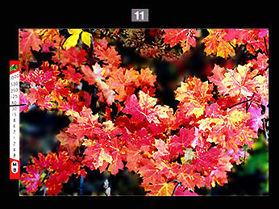 treesmaple.jpg(23k)载入中..