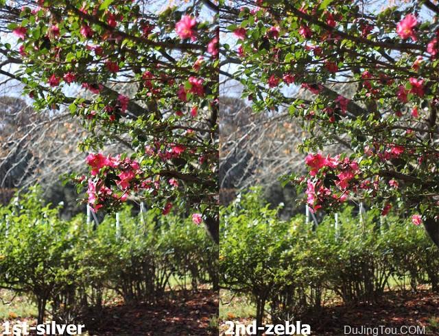 Carl Zeiss Jena Flektogon (M42) 35/2.8(1st silver type) 镜头测试及样片