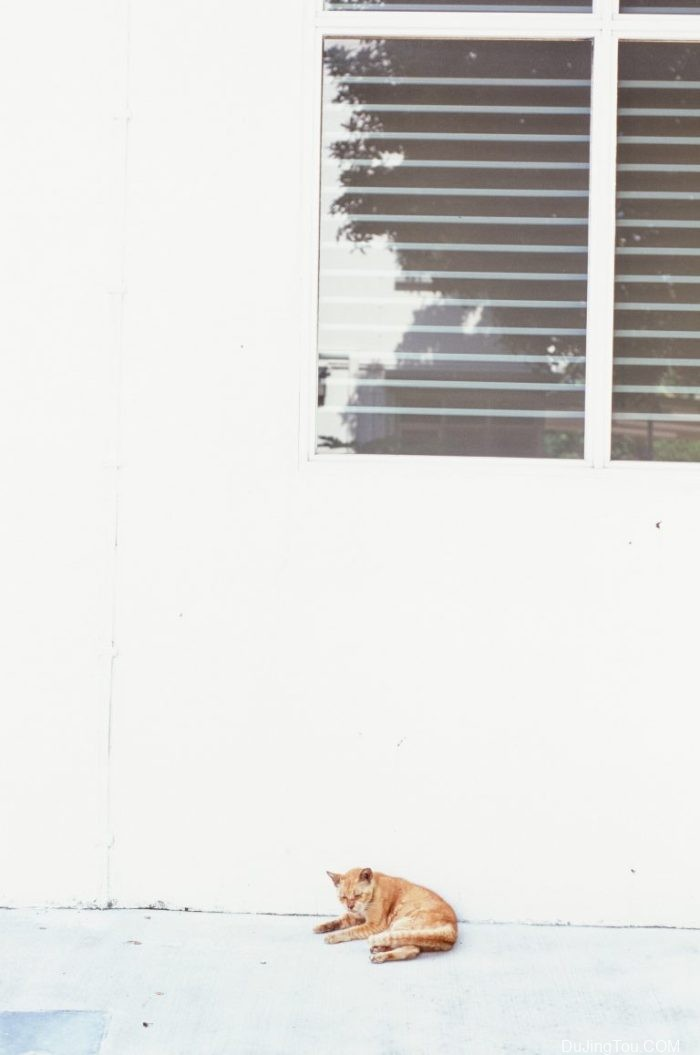 Nicole:拍摄Fuji Velvia 50反转片胶片