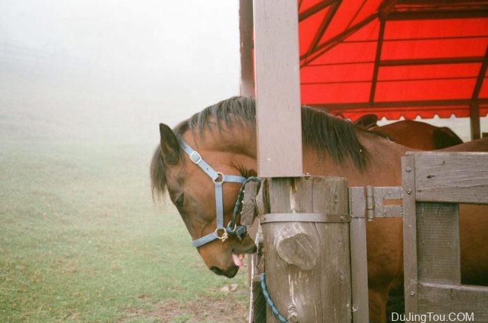 大涌清境农场的Fujifilm Superia Xtra 400胶片摄影